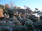 snow marren
